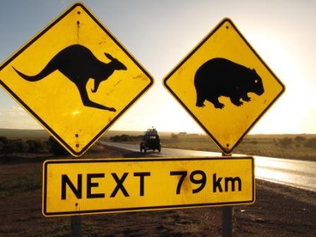 cartel canguro wombat